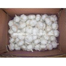 Чистый чеснок (8 кг коробка с поддоном)