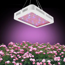 600W Grow Light Red Blue Lighting