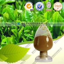 High Quality Natural Green Tea Extract Tea Polyphenols