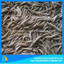 Lança de areia de alta qualidade congelado bom fornecedor de frutos do mar