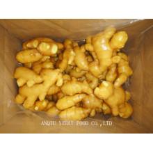 Fresh Ginger pour Midlle East 150g et plus