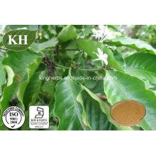 Extrait d'écorce de Quinine de haute qualité / extrait d'écorce de Cinchona;