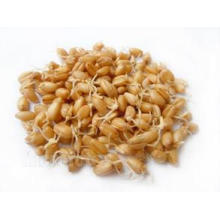 Supply Stable Quality Natural Herbal Malt P. E. Extract Powder