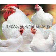 Pollo de engorde especializado en enzimas de alimentación