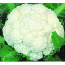 Florete de coliflor congelado IQF de alta calidad