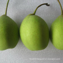 Good Quality of Fresh Green Ya Pear