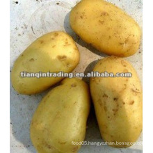 shandong new crop fresh potato