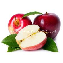 2015 Neue Frucht Frische Gala Apfel