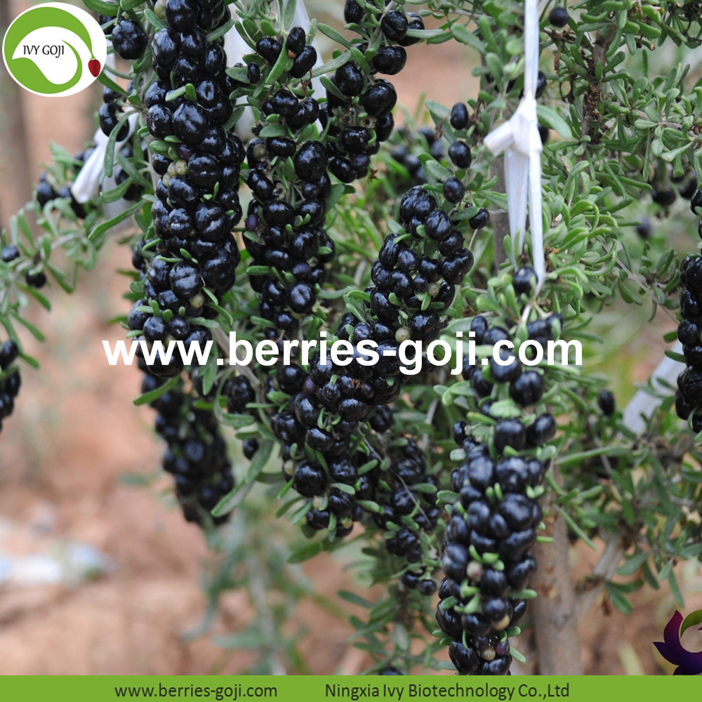 Healthy Black Dried Wolfberry