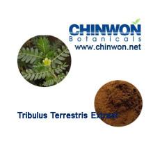 Factory Direct Supply Tribulus Terrestris Extract 98%