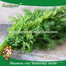 Suntoday vegetable органическое сад Ф1 купить онлайн английский фенхеля тмин семена оптом посадка поставщиком тамил rajastant(81003)