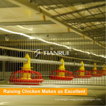 H Type Broiler Chicken Cage Used Poultry Auger Feed System for Poultry