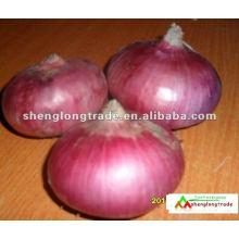 chinesische frische rote Zwiebel niedrigster Preis