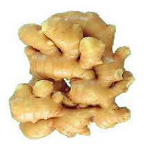 China exporters High Quality Lowest Price Chinese Wet Ginger For Sale