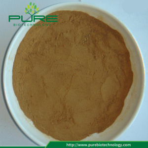 Semen Cassiae Catsia tora Seed Extract Powder