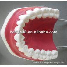 Modèle de soins dentaires médicaux de style nouveau, modèle de plastique dentaire