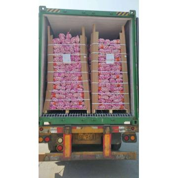 1 * 40 RH CONTAINER GARLIC