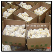 Pommes de terre de Hollande dans des cartons