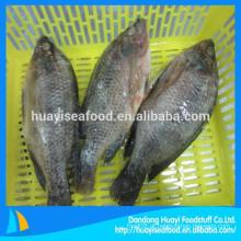 Todos os tipos de peixe congelado tilápia fornecedor