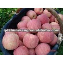 Pomme de fuji fraîche chinoise
