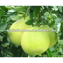 Honey Pomelo from Pinghe China (Citrus Fruit)