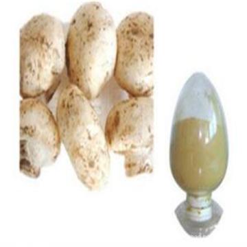 2017 alta pureza pure natural branco botão cogumelo extrato