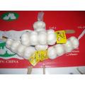 Factory Supply Pure White Garlic