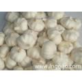 New Crop Fresh Good Quality Chinese White Garlic