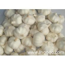 Neue Ernte Frischer guter Qualität chinesischer weißer Knoblauch