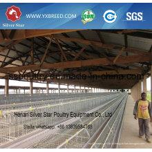 Gaiolas de frango Silver Star Poultry Equipment para camada e frango