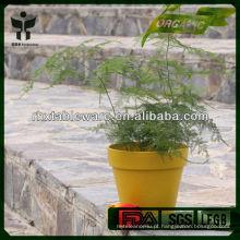 Plantas de fibra de plantas amigas do eco