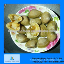 fresh frozen surf clam seafood