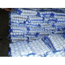New Crop Chinese White 5.5-6.0cm Garlic