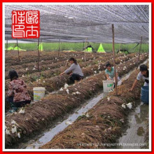 black agricultural shade net factory
