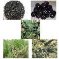 Medlar Non Pesticide Residues Black Goji Berry
