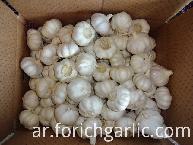 Fresh Pure Garlic 2019