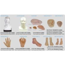 Modelo de acupuntura