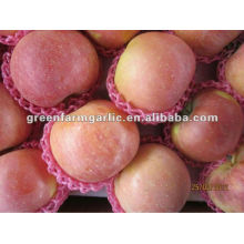 Neue Ernte China Lieferant Apfel Obst Preis