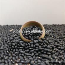 Boa origem de feijão preto