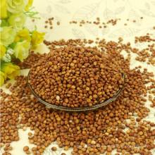 99% de pureza vermelho Sorghum para venda