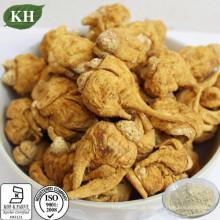 Extrato de raiz de maca 100% puro fornecimento de saúde natural