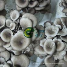 Wholesale IQF Organic Baby Oyser Mushroom
