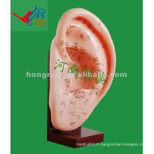 Modèle d'acupuncture d'oreille antique HR-508A 22CM, oreille d'acupuncture