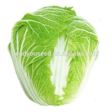 MCC05 Ganfu 50 días resistente al calor f1 semillas híbridas de col china, semillas vegetales chinas