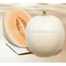 MSM061 Baiyu alta produção pura branco híbrido sementes de melão doce para o plantio