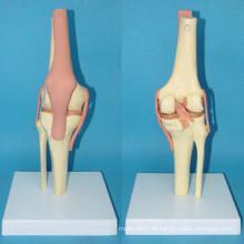 Hochwertige Gelenkfunktion Skeleton Plastic Bone Model (R020907)
