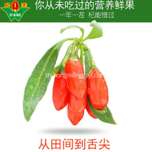 220 เมล็ด / 50g Harvest New Goji Berry
