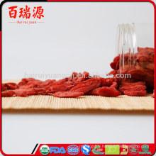 Baies de goji congelées plantant l'extrait de fruit de goji berry lycium barbarum