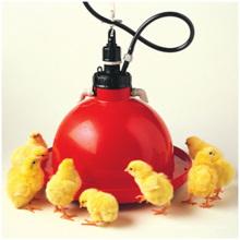 Automatische Hühnchen Trinker Ausrüstung