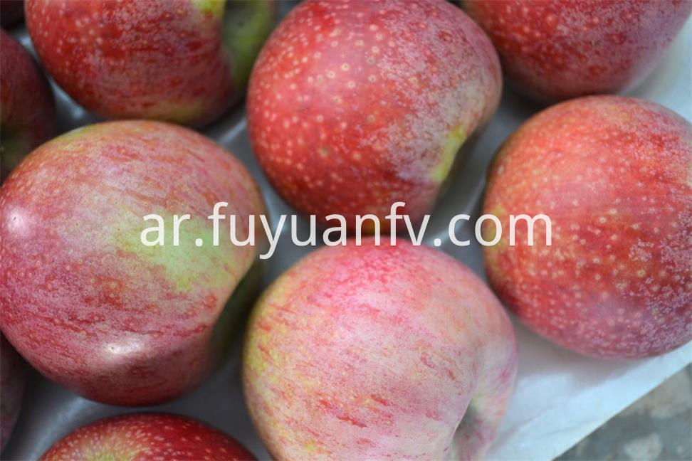 red qinguan apple